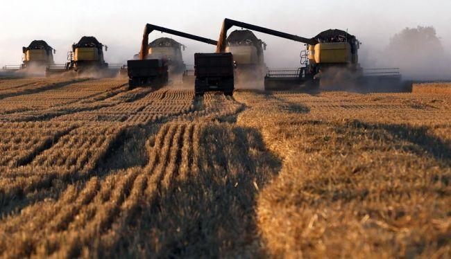 ВРоссии рекордный урожай пшеницы. Нобез квот необойтись: EADaily